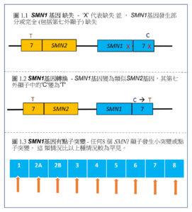 SMN1基因有點子突變。